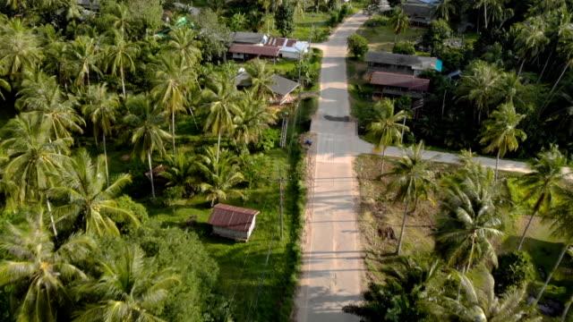 luftaufnahme, über tropischen kleinen straße und kokosnussbaum - zoo stock-videos und b-roll-filmmaterial
