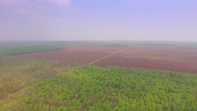 aerial slider shot revealing rubber fields. aerial slider shot revealing rubber fields. Small road through young rubber trees plantations in the background back to back stock videos & royalty-free footage