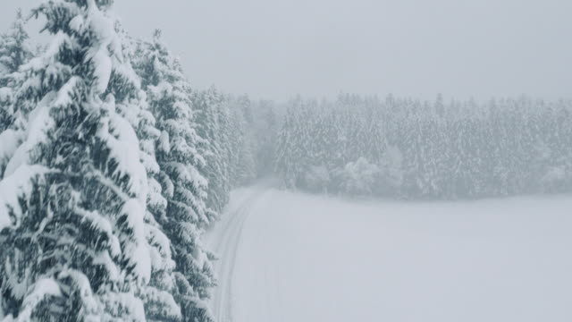 Aerial Snow covered trees embracing a white forest road video
