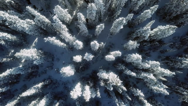 Aerial snow winter forest Snow, Scenics - Nature siberia stock videos & royalty-free footage