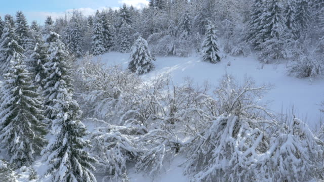 空から見た雪をかぶったツリーエリア - マルチコプター点の映像素材/bロール