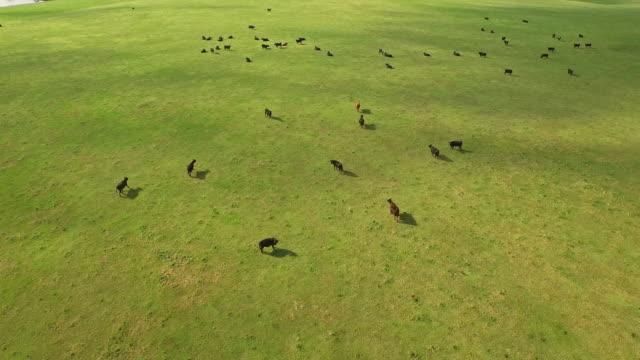 Luftbild von South Dakota Land – Video