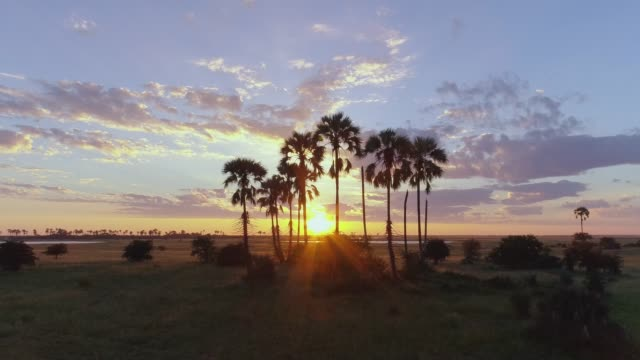 4K aerial sunset view of the sun setting through the palm trees on the Makgadikgadi pans, Botswana 4K aerial sunset view of the sun setting through the palm trees on the Makgadikgadi pans, Botswana botswana stock videos & royalty-free footage