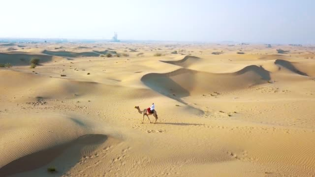 aerial survey drone flies over the desert, the bedouin with a camel goes through the desert - dubai video stock e b–roll