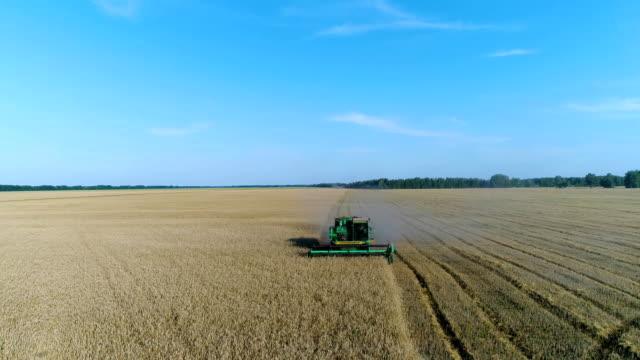 vidéos et rushes de aérien: la moissonneuse-batteuse récolte la récolte dans un champ de blé jaune magnifique. - foin