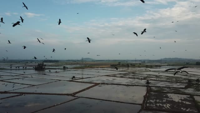 aerial thousand of asian openbill fly freely at sky - arto inferiore animale video stock e b–roll