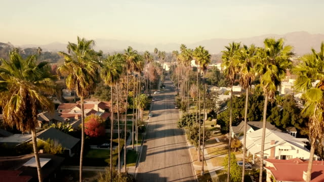 aerial through palm trees in pasadena, ca - california video stock e b–roll