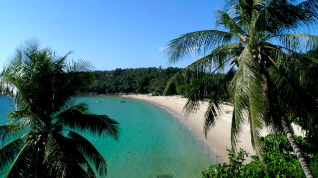 aerial: through palm trees to the beach. - phuket video stock e b–roll
