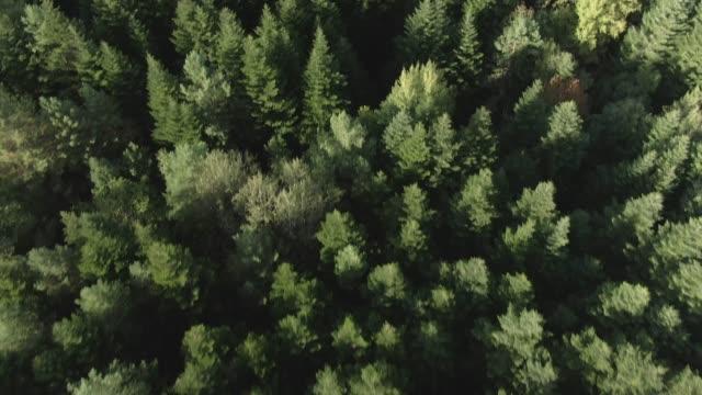 vidéos et rushes de vue aérienne de dessus vers le bas de la route de gravier dans la forêt en automne. drone tiré volant au-dessus des cimeurs d'arbre, fond de nature dans la résolution 4k - haut