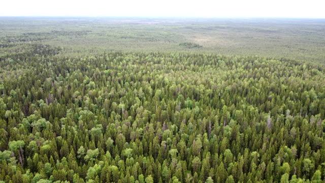 flygfoto över havet på skogen på sommaren. drone skott flyger över trädtoppar, natur bakgrund - ekosystem bildbanksvideor och videomaterial från bakom kulisserna