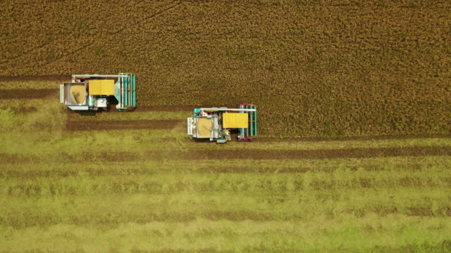 Aerial top view Combine Harvester operation on the Jasmine Rice field for Agriculture Technology concept.
