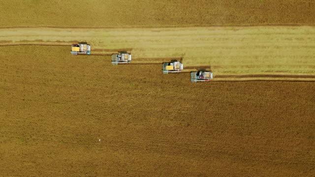 vista aerea dall'alto combine harvester operazione sulla risaia. - agricoltura video stock e b–roll
