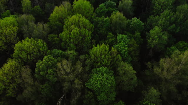 aerial top view forest, texture of forest view from above. - sustainability video stock e b–roll