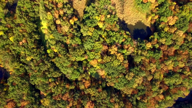 Aerial top view of autumn forest video