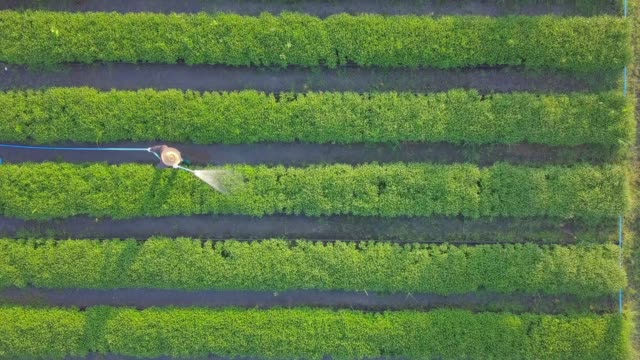 aerial top view of farmers watering vegetable using hose in the garden that planted in row for agricultural usage purpose - semenzaio video stock e b–roll