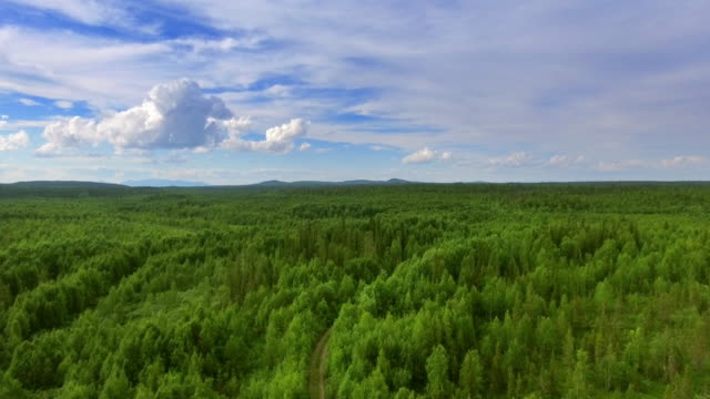 Aerial top view of forest and grass video