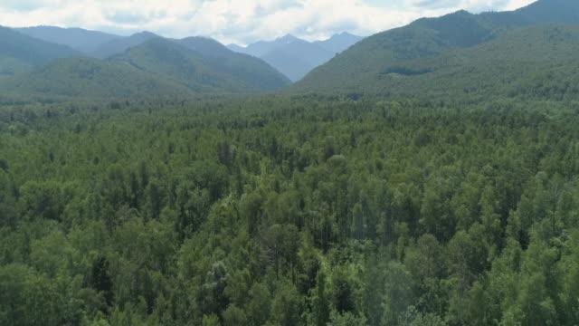緑の森の真ん中にあるゴミ捨て場の航空トップビュー - 残骸点の映像素材/bロール