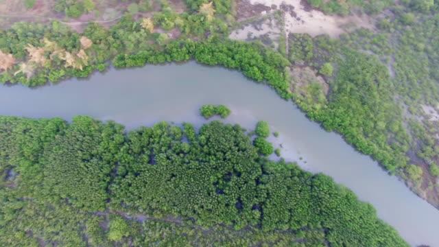 top luftaufnahme der mangrovenwälder in thailand - wasserloch stock-videos und b-roll-filmmaterial