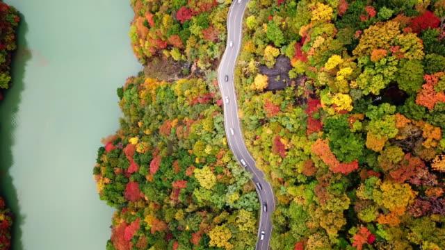 flygfoto över vägbanan med skog bytte färg på hösten nära floden i japan , resekoncept - bergsrygg bildbanksvideor och videomaterial från bakom kulisserna