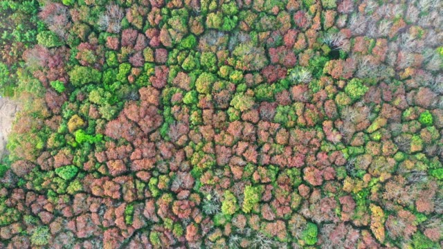 Aerial top view of the autumn deciduous forest at sunset