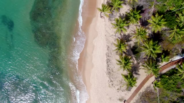 aerial top view of tropical white sand beach and turquoise clear sea water with small waves and palm trees background. - aerial beach stock videos & royalty-free footage