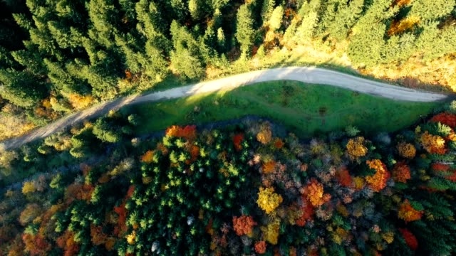 Aerial top view: sunrise flying over beautiful mixed forest in Carpathian mountains in autumn. Countryside road between the forests.