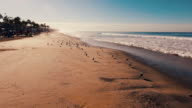 istock Aerial tracking shot of a beautiful sunrise sparkling off the ocean and sand as seagulls fly about. 494783886