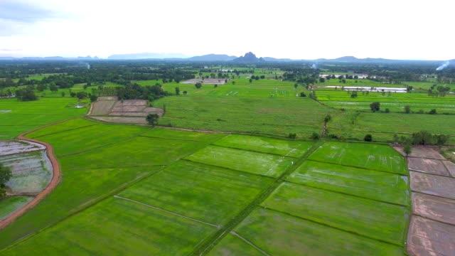 aerial video über reisterrassen in einen schönen tag - aerial overview soil stock-videos und b-roll-filmmaterial