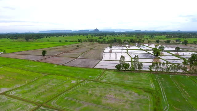 Aerial video above rice terraces in a beautiful day video