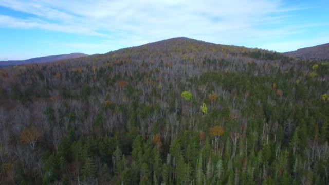 aerial video di vegetazione - colore saturo video stock e b–roll