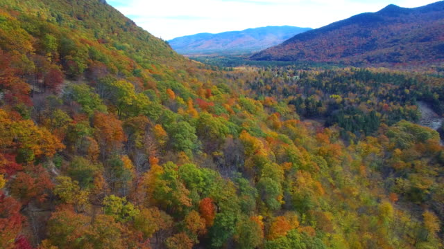 Aerial video Foliage video