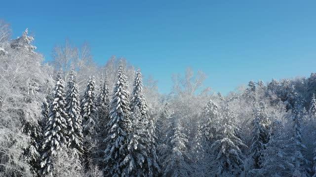 冬の季節に雪の下で森のドローンを動かす横からの航空ビデオ。 - シベリア点の映像素材/bロール