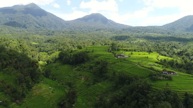 Aerial video in an amazing landscape rice field on Bali, Indonesia video
