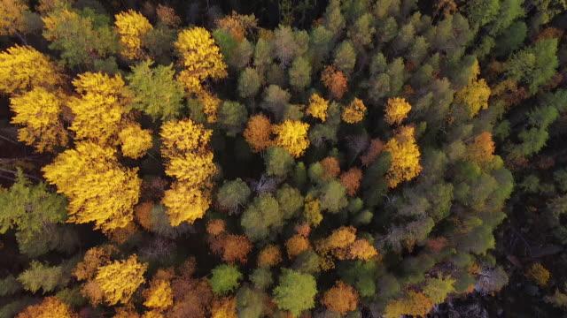 晴れた日に秋の森の中でドローンの航空ビデオ。ドローンは高高度で前進します。秋季に撮影されたhd映像 - マルチコプター点の映像素材/bロール