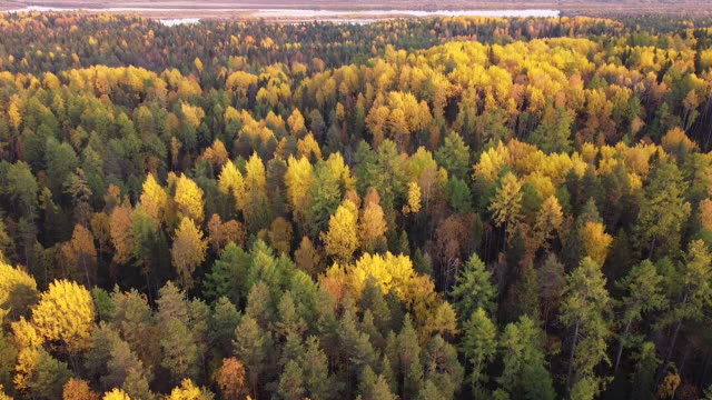 Aerial video of a drone in the autumn forest at sunny day. The drone moves forward at a high altitude. HD footage captured during the fall season Aerial video of a drone in the autumn forest at sunny day. The drone moves forward at a high altitude. HD footage captured during the fall season quadcopter stock videos & royalty-free footage