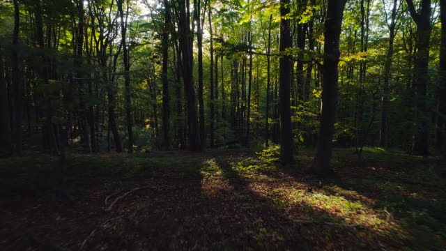 Aerial video of Autumn forest trees in the mountain. Nature green wood sunlight backgrounds