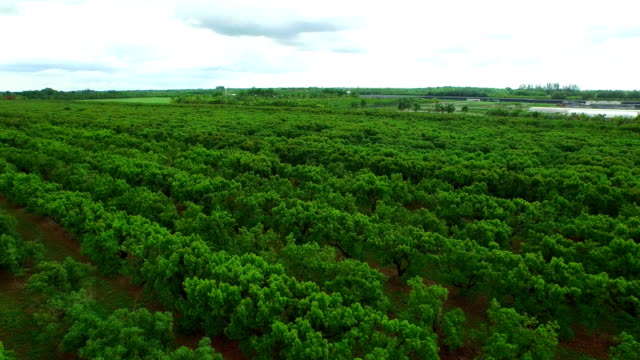 Aerial video of farms in Homestead FL video