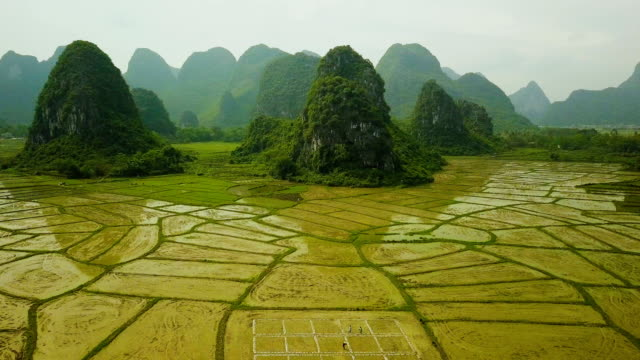 Aerial video of rice fields of the Karst Mountains of Guilin, China