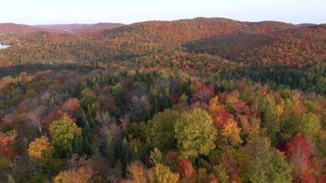 sonbahar sezonu laurentian dağları ormansonbahar renkleri 4k hava video, quebec, kanada - ultra yüksek çözünürlüklü televizon stok videoları ve detay görüntü çekimi