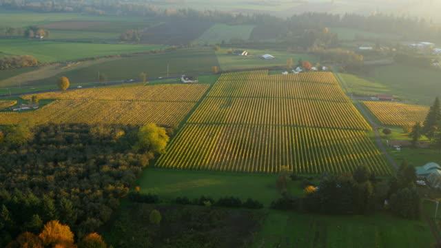 aerial video des willamette valley weinberge im herbst farbe - tal stock-videos und b-roll-filmmaterial