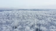 istock 4K Aerial Video View of Boreal Nature Forest in Winter After Snowstorm, Quebec, Canada 1196126148