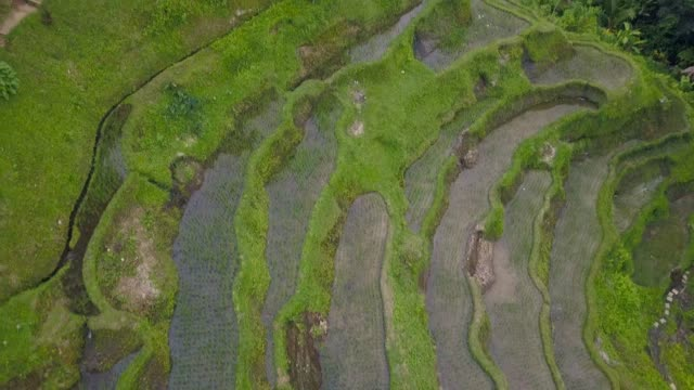 Aerial view above of Bali landscapes with terraces rice fields Aerial view above of Bali landscapes with terraces rice fields. People working at Indonesia agricultural industry banaue stock videos & royalty-free footage