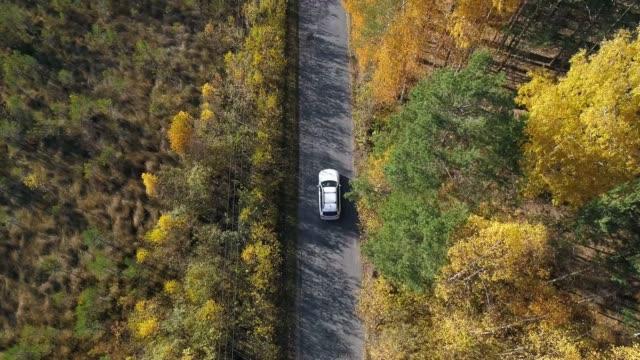 vídeos de stock, filmes e b-roll de vista aérea acima da estrada na floresta em queda com carros. - veículo terrestre