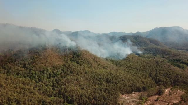 Aerial View Above WildFire Burning Forest