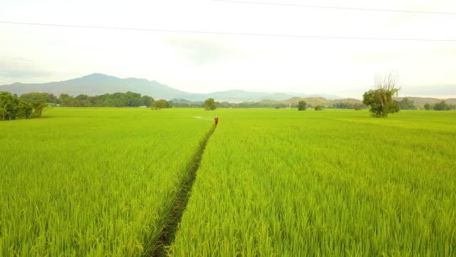 vidéos et rushes de terres agricoles agriculture vue aérienne tout en insecticide spray agriculteur - herbicide