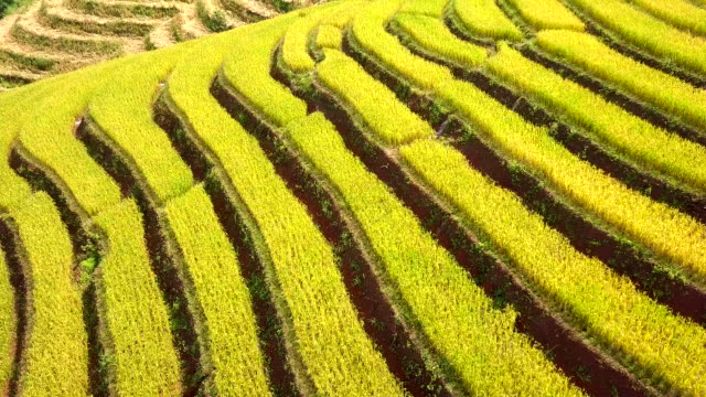 Aerial view amazing landscape rice terraces in a beautiful day Chiang Mai Thailand Aerial view amazing landscape rice terraces in a beautiful day Chiang Mai Thailand banaue stock videos & royalty-free footage