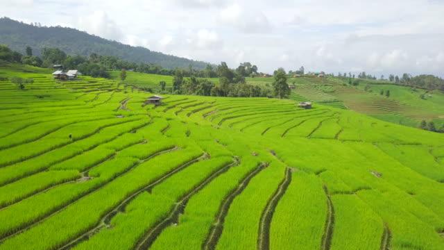 widok z lotu ptaka niesamowite tarasy ryżowe krajobraz w piękny dzień - taras ryżowy filmów i materiałów b-roll