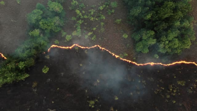 aerial view and dolly shot of forest fire. - bruciato video stock e b–roll