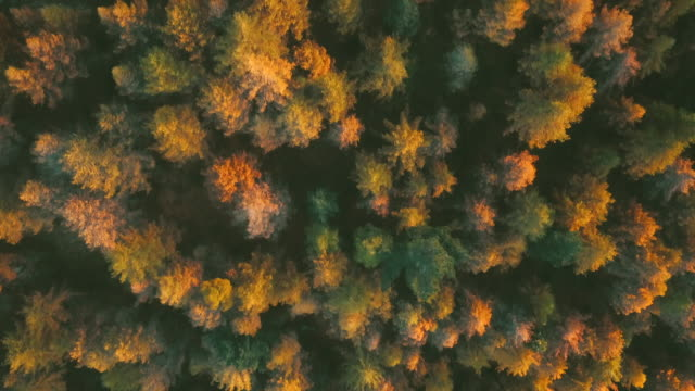 Aerial view Autumn forest during sunrise