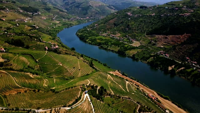 vídeos de stock e filmes b-roll de aerial view. beautiful vineyards in the douro river valley. portugal - douro